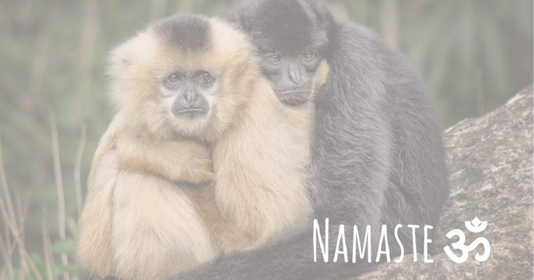 monkey love virtual hugs blog